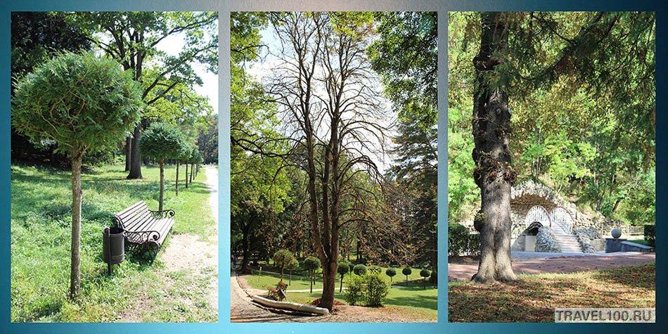 kislovodskii-park-dereviya
